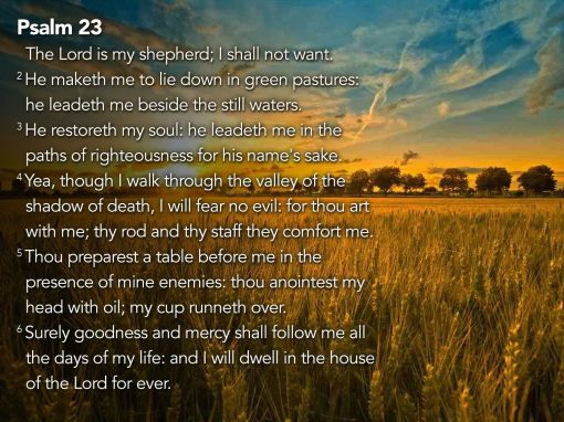 Shepherding 2