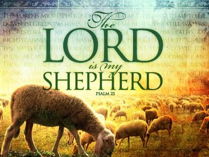 Shepherding 3