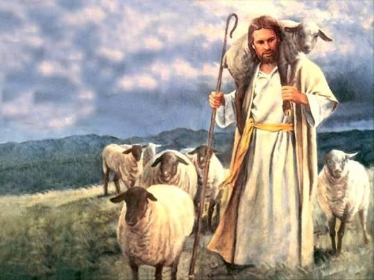 Shepherding cover