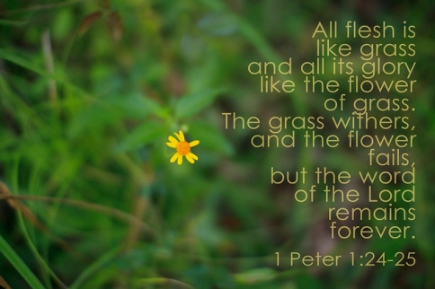 My Wilted Flower verse